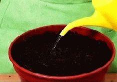 полить семена огурцы на подоконнике фото