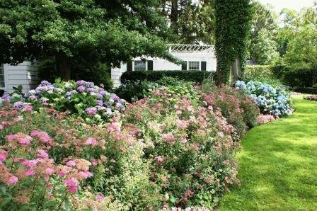 Спирея в дизайне вашего сада