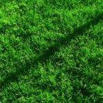 теневыносливый газон фото