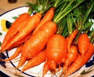 морковь выращивание из семян фото