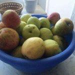 яблоки урожай фото