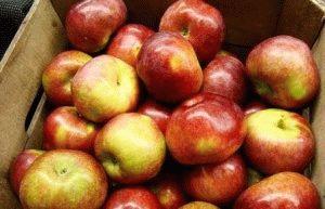как хранить яблоки в ящике