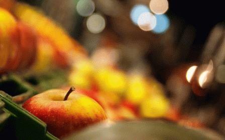 как хранить яблоки до зимы