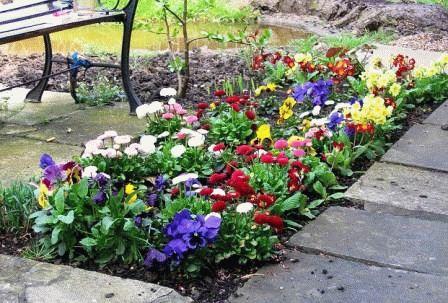 маргаритки в саду дизайн фото