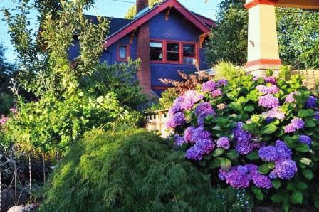 Гортензия садовая в ландшафтном дизайне