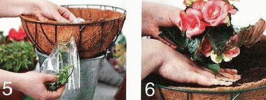 Цветы в подвесных корзинах  как сажать