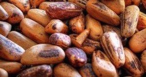 как вырастить кедр из ореха