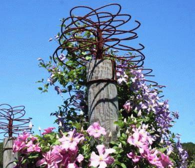клематис в саду конструкция своими руками фото