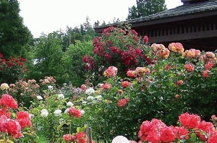 Розы в ландшафтном дизайне сада: сочетания с другими цветами