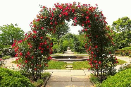 шпалеры для роз арка фото
