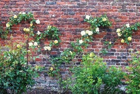 оформление розы на стене фото