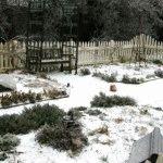 Календарь огородника на декабрь: дела на даче