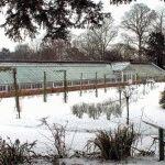 Календарь огородника на февраль: дела на даче