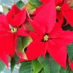 Календарь цветовода на декабрь: работы в цветнике