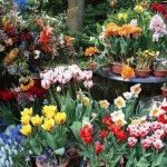 Календарь цветовода на май: работы в цветнике