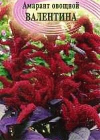 амарант овощной сорт валентина фото