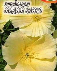 эшшольция сорт Мадам Клико фото