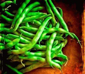 как выращивать спаржевую фасоль