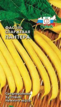 фасоль сорт Пантера фото