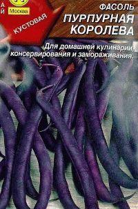 фасоль сорт Пурпурная королева фото