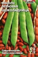 фасоль сорт Шоколадница фото