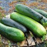 Лучшие сорта кабачков – фото, описание