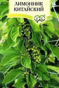 лимонник китайский посадка семенами