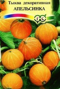тыква сорт Апельсинка фото