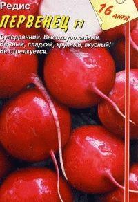редис сорт Первенец фото