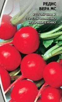 редис сорт Вера МС фото