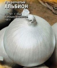 лук сорт Альбион фото