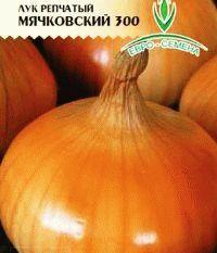лук сорт Мячковский фото
