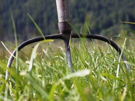 травяной настой как удобрение
