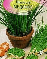 шнитт лук медонос фото