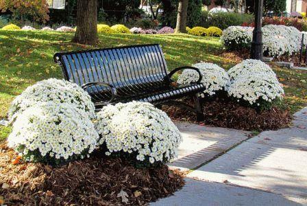 белый сад ландшафт фото