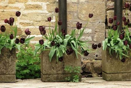 черные цветы в ландшафтном дизайне сада фото