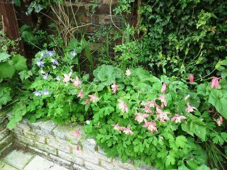пастельный сад фото