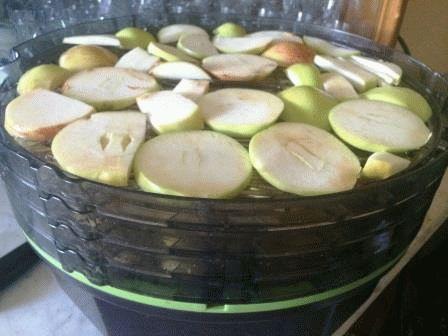 сушка яблок в электросушилке