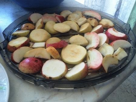яблоки на поддоне электросушилки фото