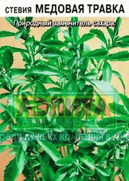 steviya-medovaya Медовая травка