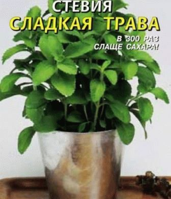steviya-sladkaya Сладкая трава