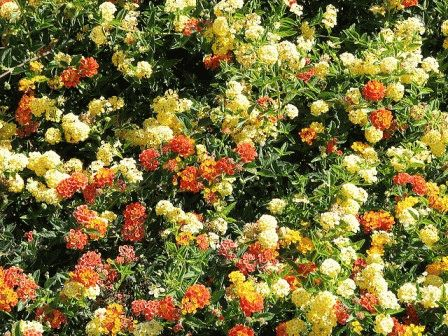 оранжевый желтый сад ландшафтный дизайн фото