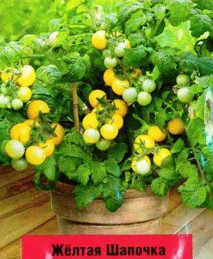 томат черри сорт  Желтая шапочка фото