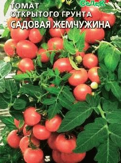 томат черри сорт  Жемчужинка фото