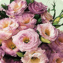 Цветок похожий на розу