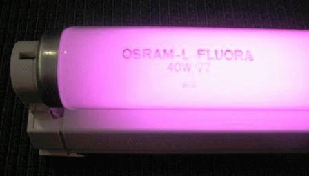 фитолампы фирмы Osram Fluora