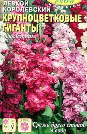 Левкой фото Крупноцветковые