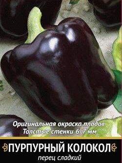 перец сорт Пурпурный колокол фото
