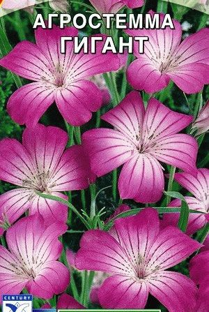 Агростемма семена