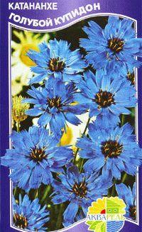 Катананхе Голубой купидон  семена